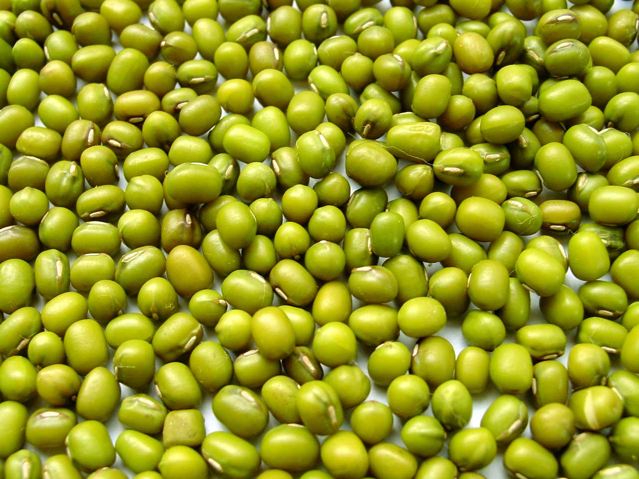 effects of powdered energy drinks in mung bean plants